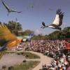 Spectacle-des-Oiseaux-en-Vol.jpeg