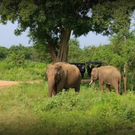Circuit au Sri Lanka, à l'assaut des parcs nationaux